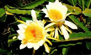 Hawaii Flowers Night Blooming Cereus