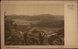 Rice Fields Near Djocja Indonesia c1910 Postcard