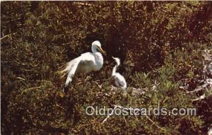 Stinson Beach, CA, USA Great Egret Postcard Post Card Stinson Beach, CA, USA ...