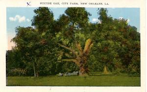 LA - New Orleans. Suicide Oak in City Park