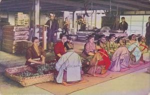 Advertising Ridgways Tea In A Japanese Tea Factory Showing Girls Sorting Tea ...