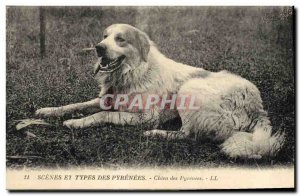 Old Postcard Dogs Dog of the Pyrenees