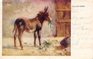 The Cpl., donkey Animals, Misc, 1907