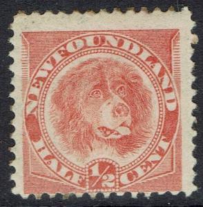 NEWFOUNDLAND 1896 DOG 1/2C