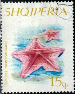 Bird's Foot Starfish, Albania stamp SC#934 used