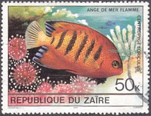 Zaire # 978 used ~ 50k Tropical Fish
