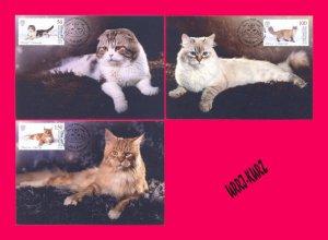 KYRGYZSTAN 2019 Nature Fauna Domestic Animals Pets Cats Maxicards Maximum Cards