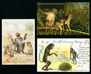 US Stamps 3x Very Scarce Monkey Postcards