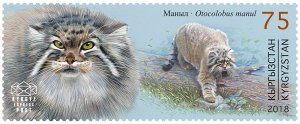 Stamps of Kyrgyzstan 2018. - Red Book of Kyrgyzstan - Pallas's cat. Stamp.