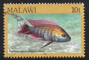 Malawi #432 10t Fish - Trematocranus Jacobfreibergi
