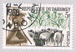 Dahomey 162 Used Cattle  (BP39024)