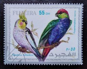 Animals, Birds, Fujairah (4)