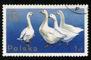 Bird 1Zl (TS-695)