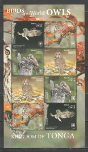 I763 2019 Exclusive Tonga Fauna Vögel Eulen Sh Nominale MNH