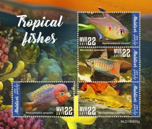 MALDIVES - 2019 - Tropical Fishes - Perf 4v Sheet - MNH