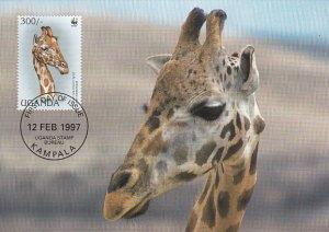 Uganda 1997 Maxicard Sc #1469c 300sh Rotschild's giraffe WWF