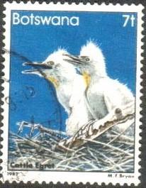 Bird, Cattle Egrets, Botswana stamp SC#309 Used