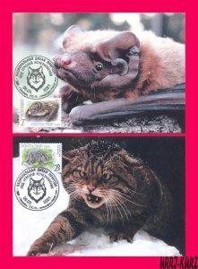 TRANSNISTRIA 2021 Fauna Animals Mammals Bat Wild Forest Cat 2 MaxiCards Cards