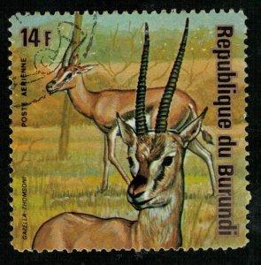Animals (T-5051)