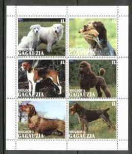 GAGAUZIA SHEET DOGS
