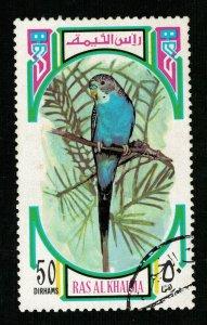Bird, Ras al-Khaimah (ТS-2252)