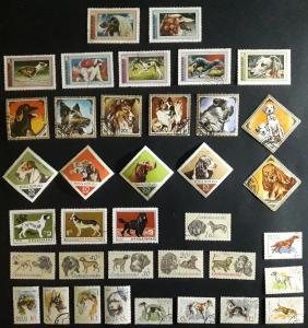 Animals, Dogs, №41-Т