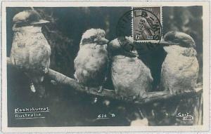 37213 MAXIMUM CARD - AUTRALIA : BIRDS 1948
