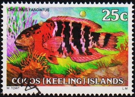 Cocos(Keeling)Islands. 1979 25c S.G.40 Fine Used