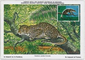 32179  MAXIMUM CARD - POSTAL HISTORY - Somalia: Panther,   Wild Animals, 1961