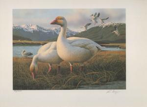 ALASKA #7 1991  STATE DUCK STAMP PRINT SNOW GEESE REGULAR EDITION Reg $195
