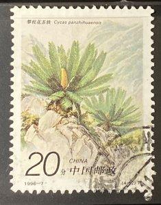 CHINA PR, 1996, used 20f, Cycas Scott 2672