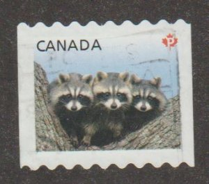 2506 Racoons