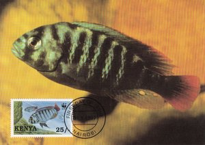 Kenya 1997 Maxicard Sc #706 25sh Crimson-tailed Scraper cichlid WWF