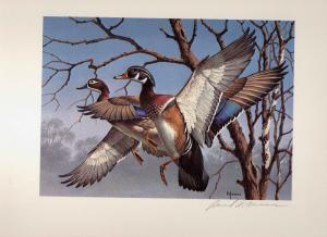 1974 Federal Duck Stamp RW41 Wood Duck Painting Print by David Maass