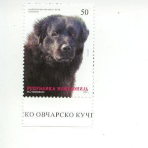 2011 Macedonia Shepard Dog (Scott 556) MNH