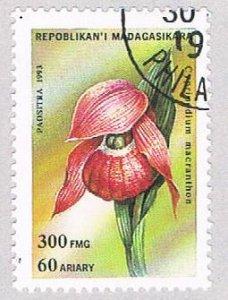 Madagascar Flower 300 - wysiwyg (AP108604)