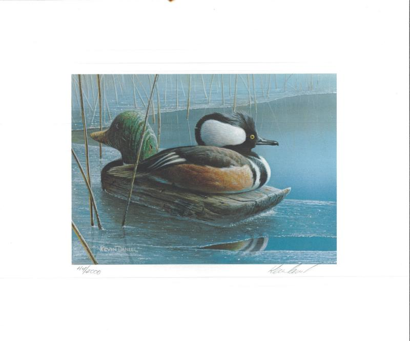 MINNESOTA #14 1990 STATE DUCK STAMP PRINT HOODED MERGANSER no stamp no folder