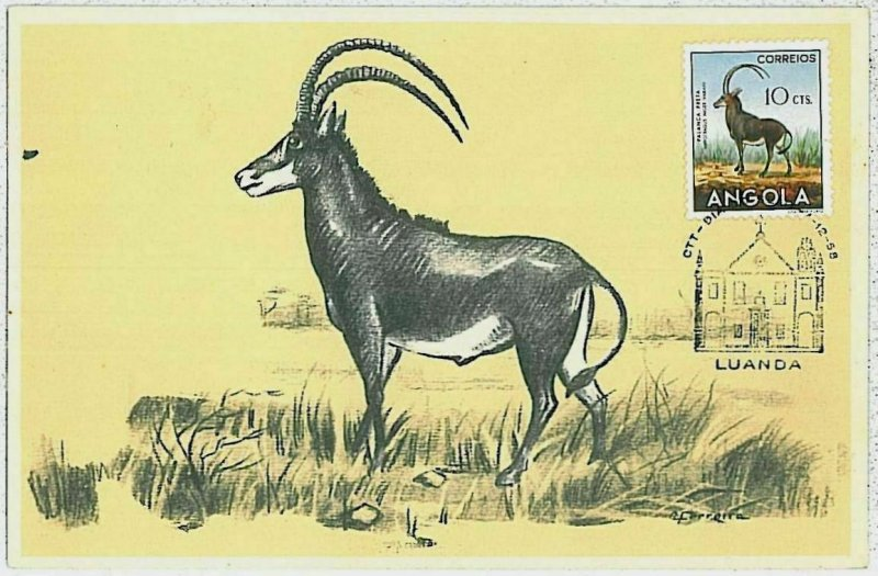 32117 - Angola - POSTAL HISTORY - MAXIMUM CARD  Wild Animals SAFARI fauna 1958