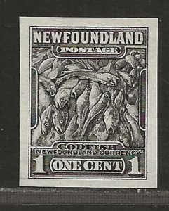 NEWFOUNDLAND  SC# 184c  IMPERF SINGLE  VF/MNG