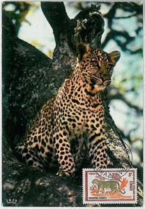 MAXIMUM CARD - POSTAL HISTORY - Congo: Panther, Safari, Wild Animals, 1972