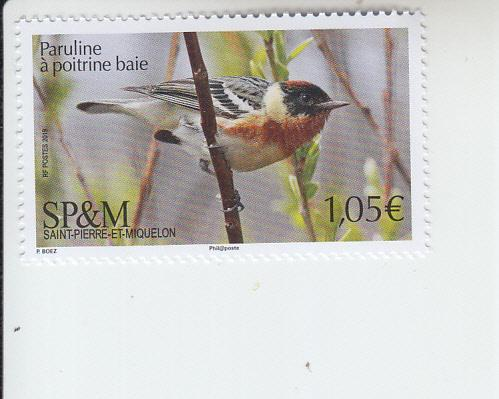 2019 St Pierre & Miquelon Bay-breasted Warbler (Scott NA) MNH