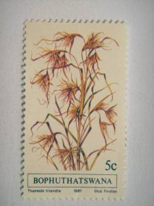 BOPHUTHATSWANA, 1981 5c MNH Indigenous Grasses (1st series), ?Themeda triandr...