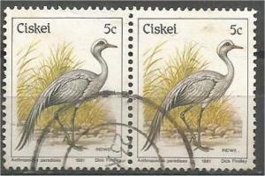CISKEI, 1981, used 5c, Birds, Scott 9