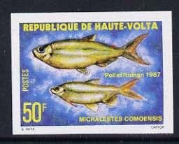 Upper Volta 1979 Freshwater Fish 50f Como tetra unmounted...