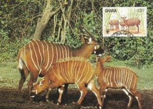 WWF072) WWF Panda, Maxicards, Ghana, Bongo, set of 4