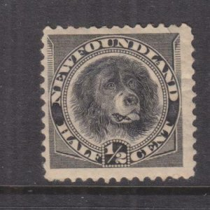 NEWFOUNDLAND, 1894 Dog, 1/2c. Black, lhm., slight paper on reverse.
