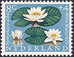 Netherlands # B345 mnh ~ 8¢ + 4¢ Flowers - White Water Lilies