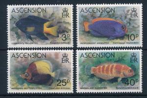 [31453] Ascension 1980 Marine Life Fish MNH