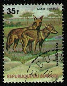 Animals, 35F (T-5059)