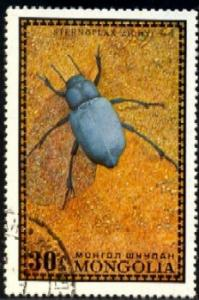 Insect, Bug, Sternoplax Zichyi, Mongolia SC#669 used